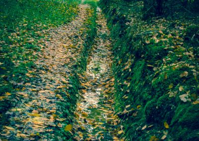 Fall Colors --221119-51