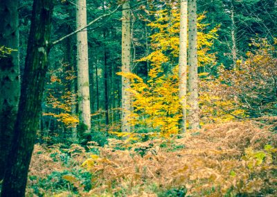 Fall Colors --221119-53