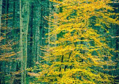 Fall Colors --221119-58