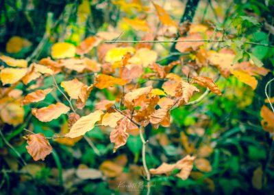 Fall Colors --221119-6