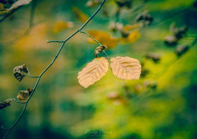 Fall Colors --221119-61