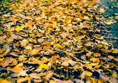 Fall Colors --221119-7