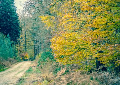 Fall Colors --221119-74