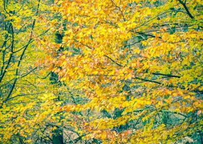 Fall Colors --221119-75