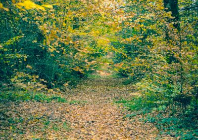 Fall Colors --221119-77