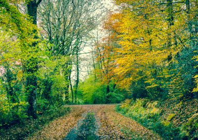 Fall Colors --221119-78
