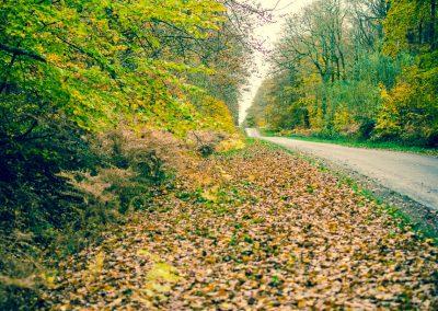 Fall Colors --221119-9
