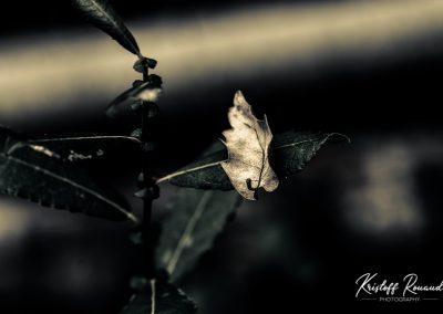 Fall_October (15 sur 62)