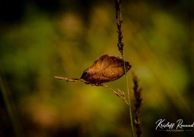 Fall_October (17 sur 62)