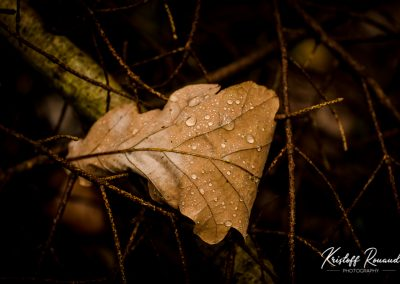 Fall_October (32 sur 62)