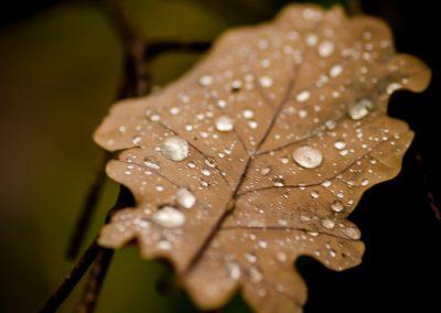 Fall_October (33 sur 62)