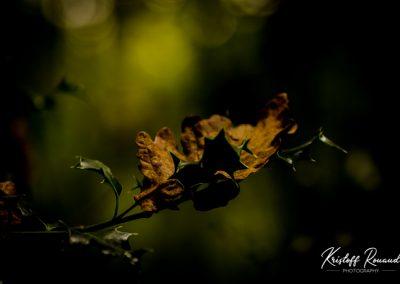 Fall_October (49 sur 62)