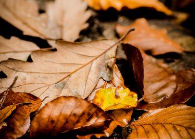 Fall_October (51 sur 62)