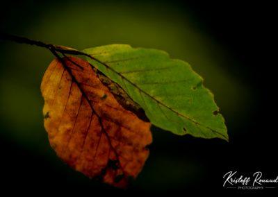 Fall_October (52 sur 62)