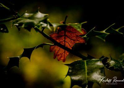 Fall_October (53 sur 62)