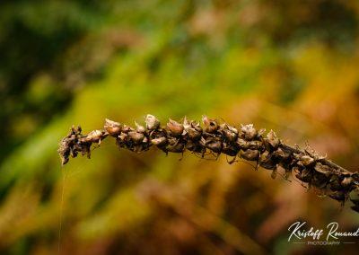 Fall_October (7 sur 62)