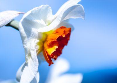 Narcissus-110420-23