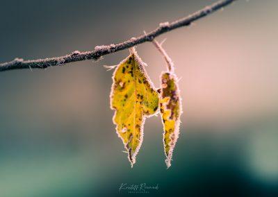 Winter-15