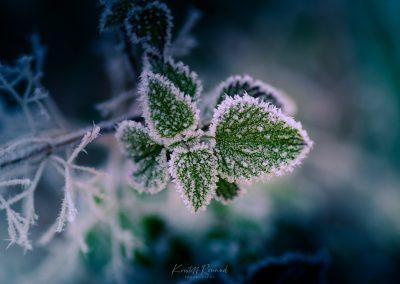 Winter-35