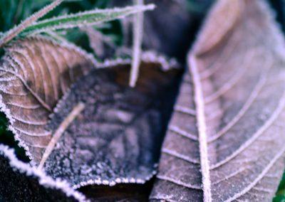 Winter-41