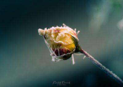 Winter-48