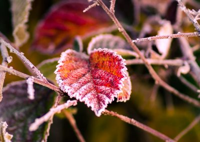 Winter-53