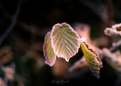 Winter-54