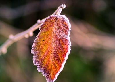 Winter-55