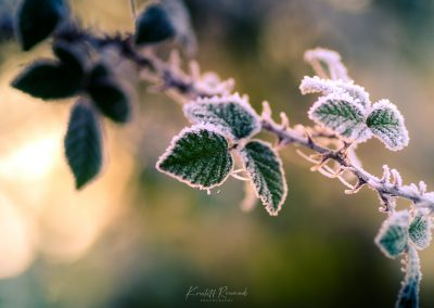 Winter-66