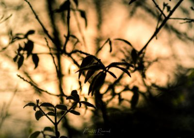 Winter-67