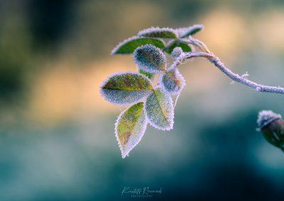 Winter-80