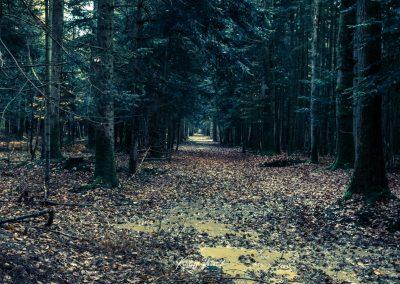lostwood-12
