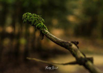 lostwood-13