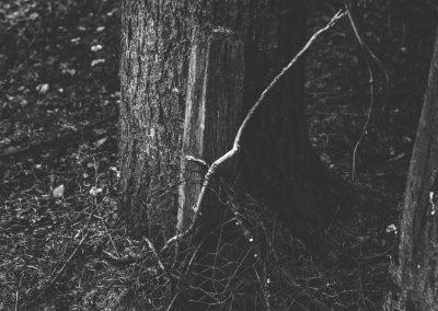lostwood-21