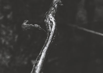 lostwood-22