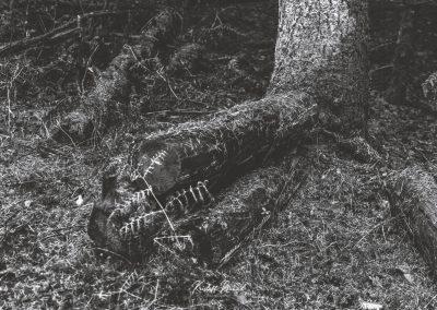 lostwood-23