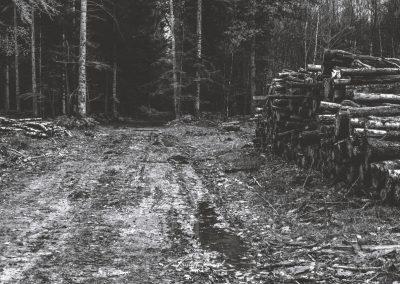 lostwood-3