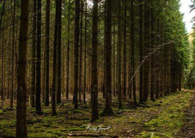 lostwood-37