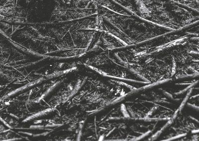 lostwood-41
