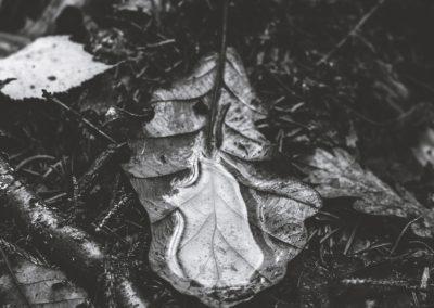 lostwood-43