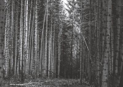 lostwood-48