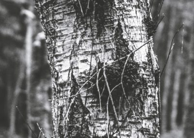 lostwood-52