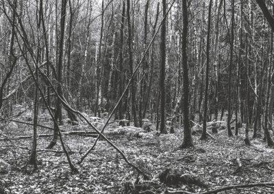 lostwood-9